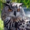 180px-eagle_owl_img_9203_thumb128