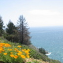 California_108_thumb128