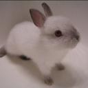 Bunny_thumb128