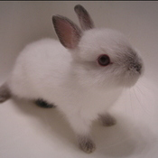 Bunny_thumb175
