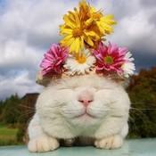 Whitecat_thumb175