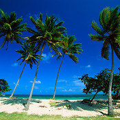 Bacardi_beach__cayo_levantado__dominican_republic_thumb175