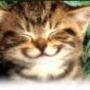 Cats_meow_box_thumb128