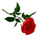 Rose_png649_thumb128