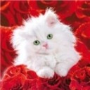Kitty_and_red_roses__avatar_thumb128