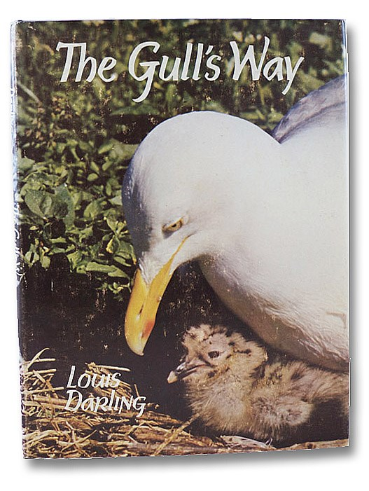 The Gull's Way, Darling, Louis