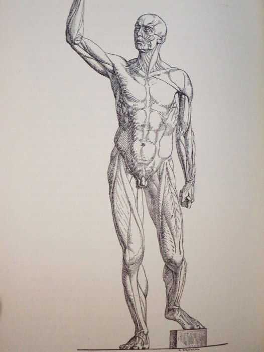 History and Bibliography of Anatomic Illustration in its Relation to Anatomic Science and the Graphic Arts, with a Biographical Sketch of the Translator and Two Additional Sections, Choulant, [Johann] Ludwig; Frank, Mortimer; Garrison, Fielding H.; Streeter, Edward C.