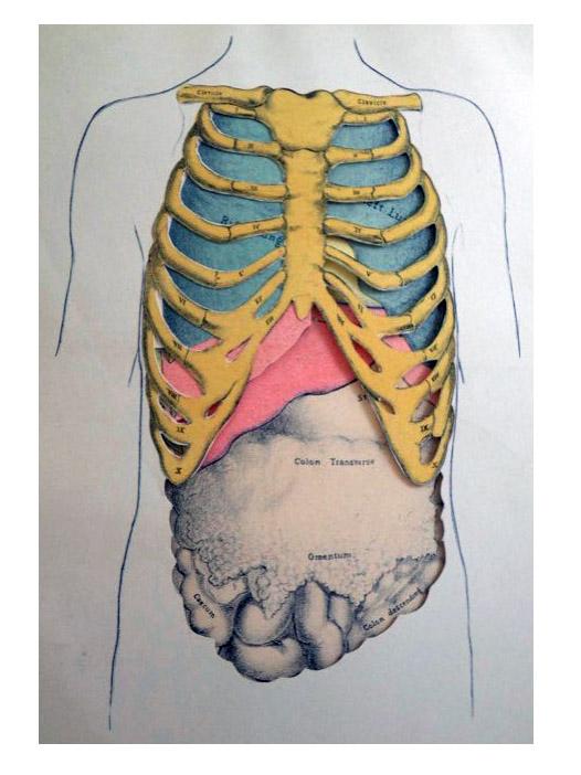 A Manual of Physical Diagnosis, Delafield, Francis; Stillman, Charles F.