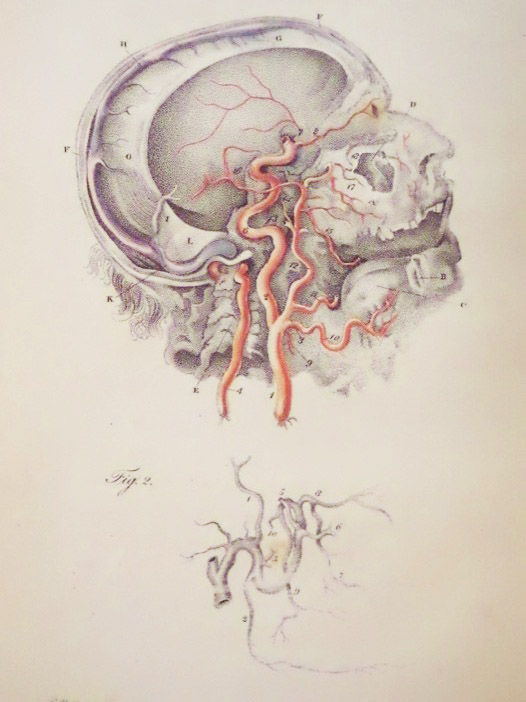 Engravings of the Arteries; Illustrating the Second Volume of the Anatomy of the Human Body, and Serving as an Introduction to the Surgery of the Arteries., Bell, Charles