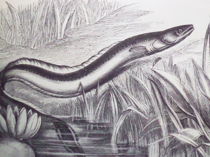 The New Illustrated Natural History, Wood, J.G. [John George]