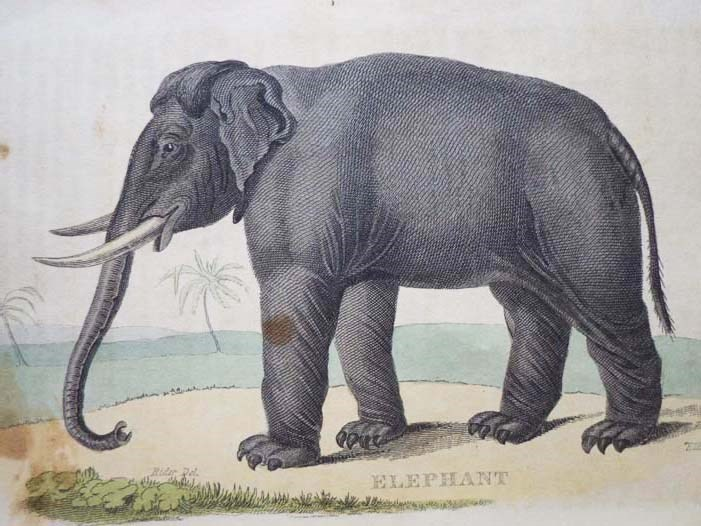 Image for A Natural History of Animals.