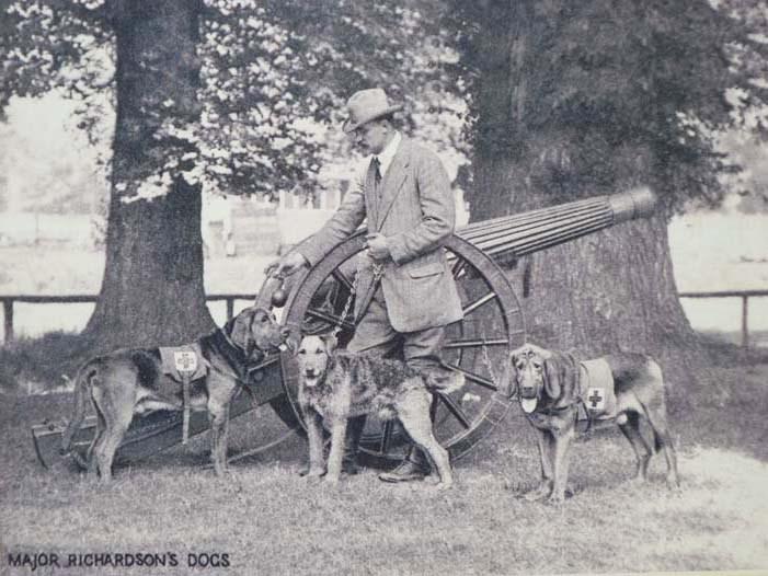 Image for Major Richardson's Dogs [World War I; Dogs][Print]