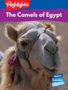 The Camels of Egypt