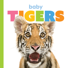 Starting Out: Baby Tigers