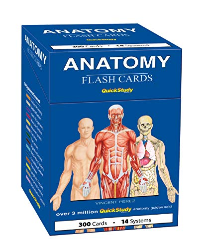 Cover image for ANATOMY FLASH CARDS