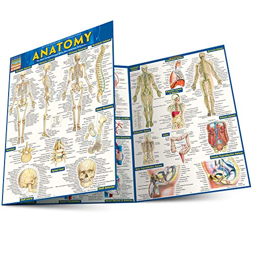 ANATOMY LAMINATED STUDY GUIDE