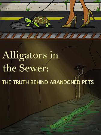 Alligators In The Sewer:The Truth Behind Abandoned Pets