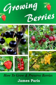 Growing Berries