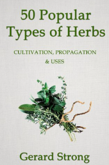 50 Popular Types of Herb