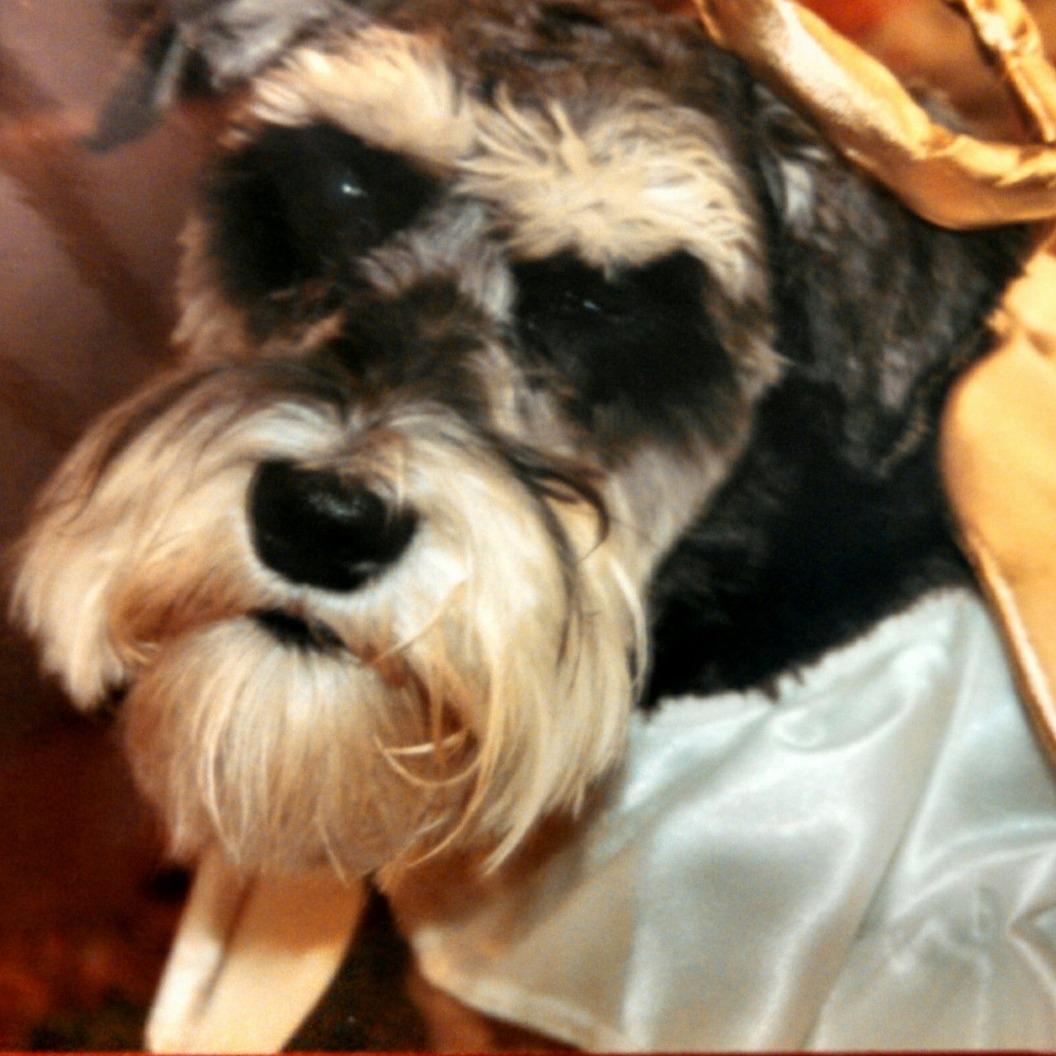 Small Dog Rescue Louisiana