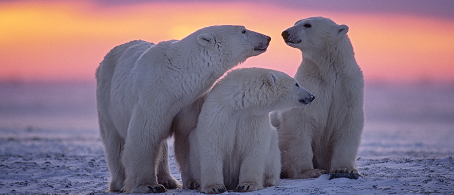 Northern Europe Charter Nordic Arctic Polar Bears