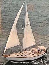 Sea Angel 259998