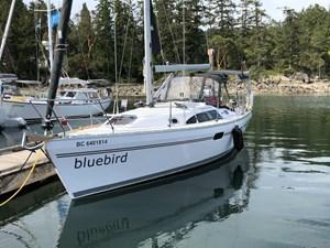 Bluebird 265238