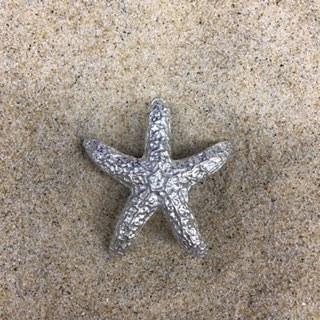 Starfish Pewter Knob