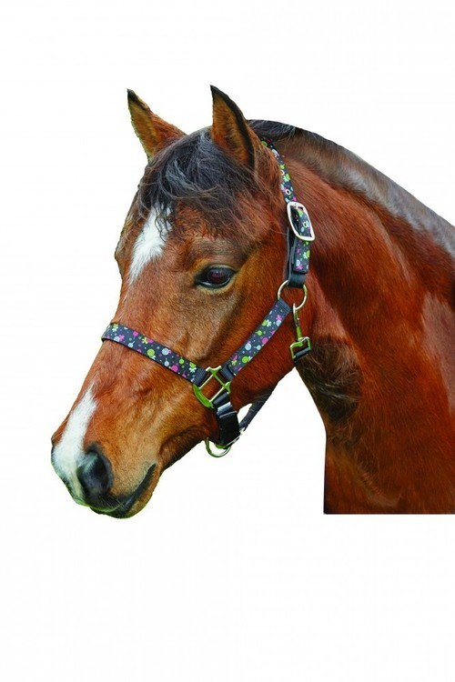 Roma Ribbon Breakaway Headcollar