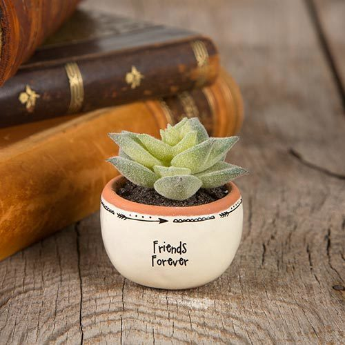 Forever Friends Succulent Keepsake