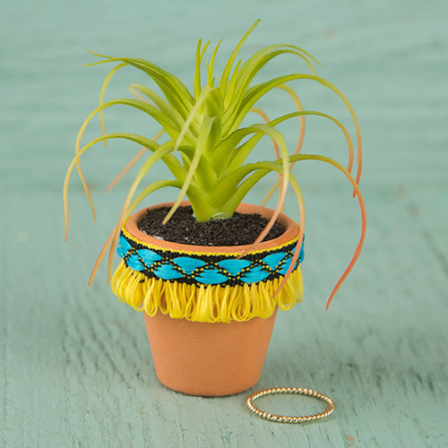 Yellow Fringe Mini Succulent