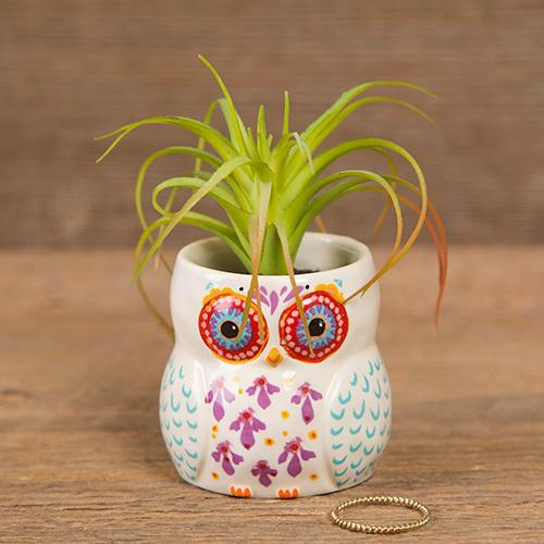 Owl Critter Succulent