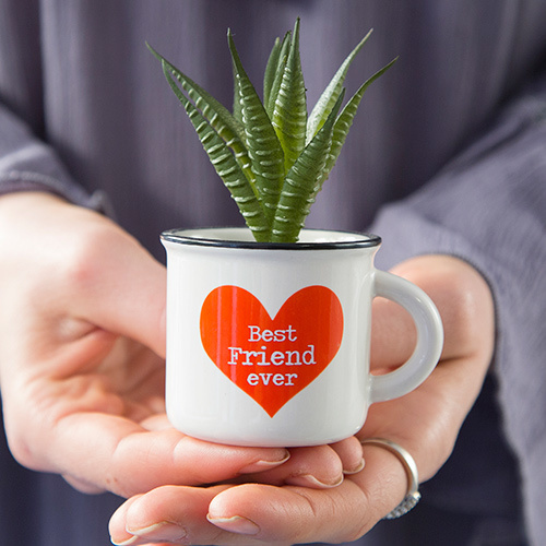 Best Friend Ever Mini Mug Succulent