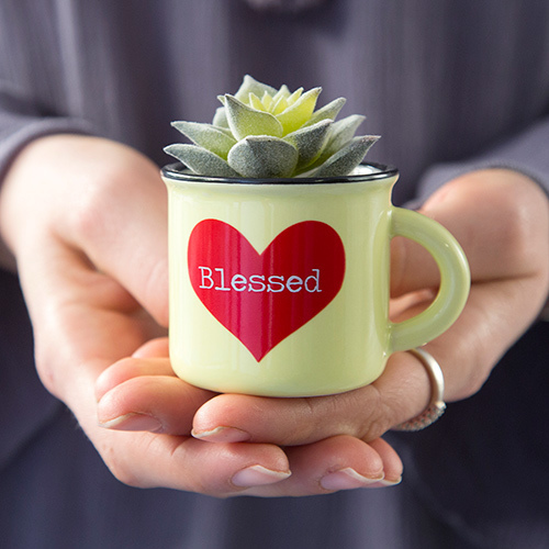 Blessed Mini Mug Succulent