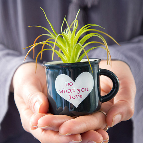 Mini Mug Succulent Do What You Love By Natural Life