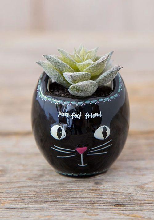 Critter Succulent Cat
