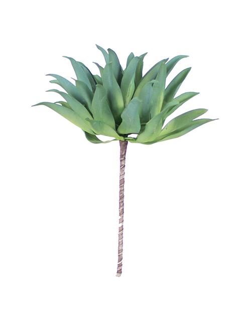 Botanica #896