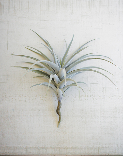 Giant Artificial Air Plant