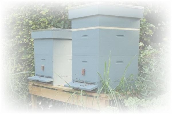 bijen- en insectenkast