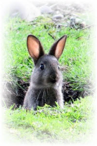 konijnenren maken problemen