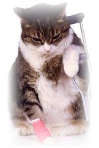 kattenhuis maken problemen