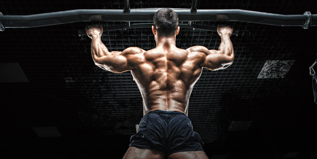 ultimate back exercises