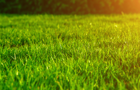 Aerated Lawn