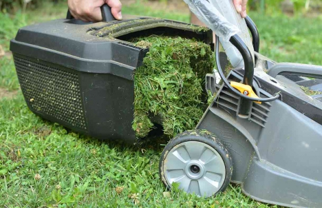 Grass-cutting Tips for a Healthier, Happier Lawn | Best Pick