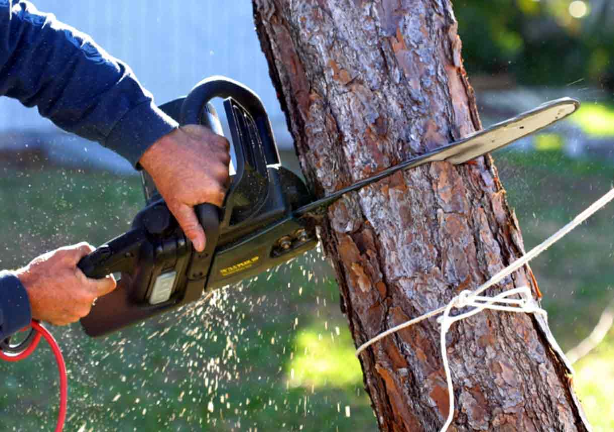 Tree Removal Tips: Five Things to Keep in Mind | Best Pick Reports