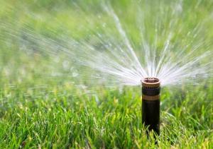 Lawn sprinkler on green grass