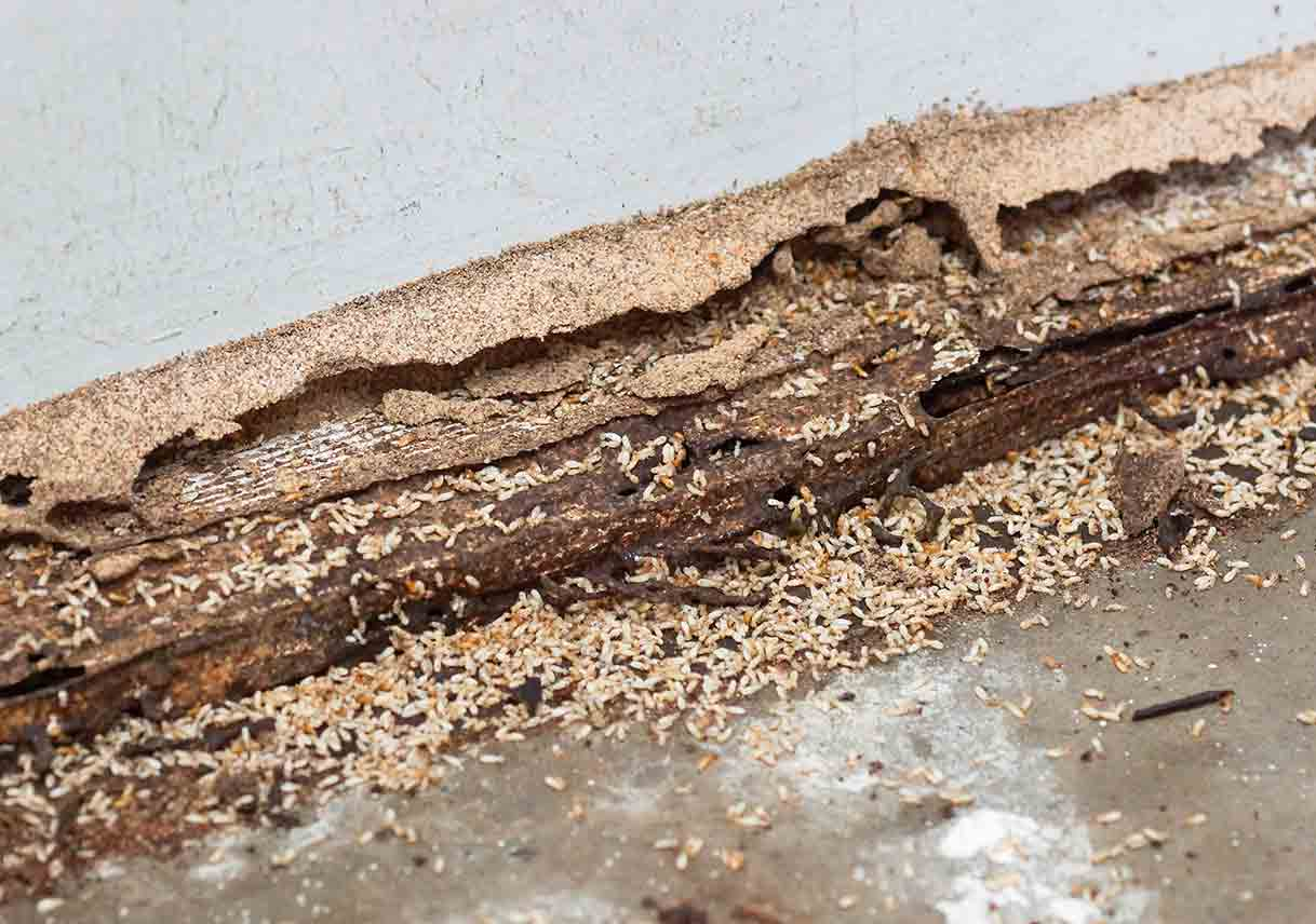 Different Types Of Termites And The Unseen Damage They Cause 2019 Update Best Pick Reports