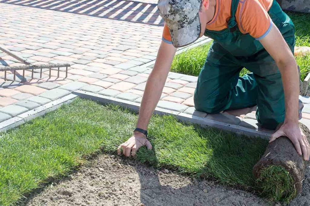 landscaper installing turf grass around hardscape path