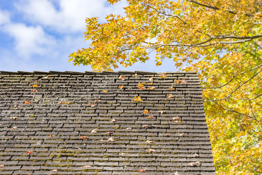 Old house roof with autumn tree