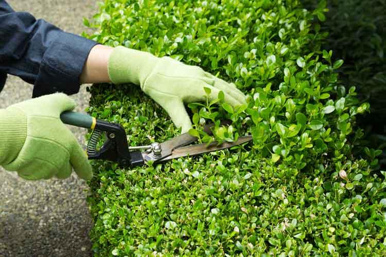 trim landscaping
